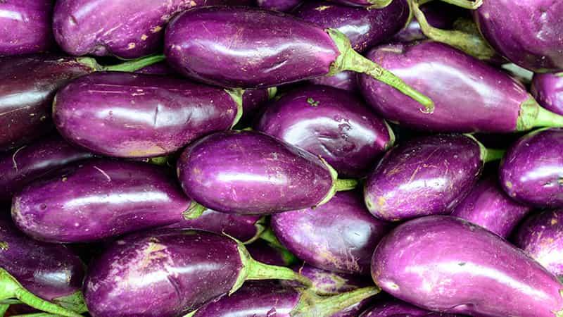 aubergine essendorfer